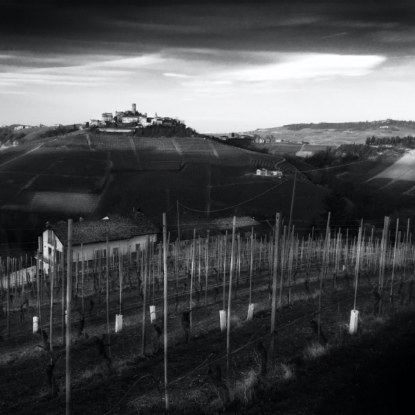 View of Barolo vineyards