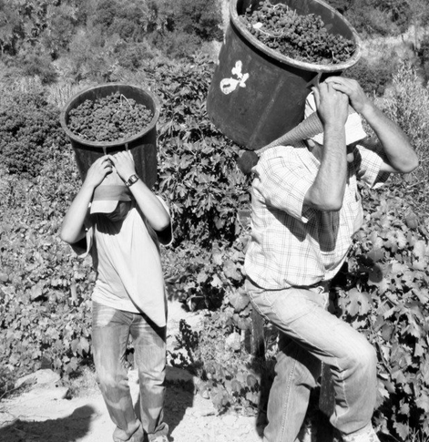 Quinta do Noval harvesters in the Douro Valley